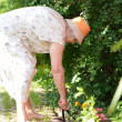 Senior woman working in garden. — Stock Photo