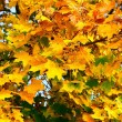 Autumn colorful leaves. — Stock Photo