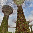 Gardens by the Bay. Singapore. — Stock Photo