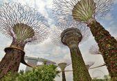 Trädgårdar av viken. singapore. — Stockfoto