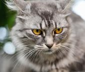 Cat on tree. — Stock Photo