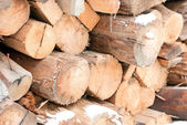 Firewood stacked in a pile in the winter — Stock Photo