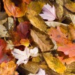 Autumn Leaves Background Texture — Stock Photo