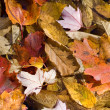 Autumn Leaves Background Texture — Stok fotoğraf