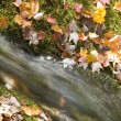 Autumn leaves and waterfall — Stock Photo