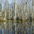 Swamp Reflections — Stock Photo