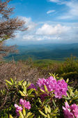 Blue Ridge Mountains — Stock fotografie