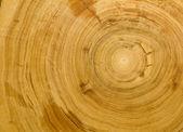 Wood grain background texture — Stock Photo
