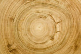 Cut log woodgrain texture — Stock Photo
