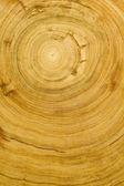 Wood grain texture — Stock Photo