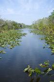 Everglades National Park — Stock Photo
