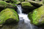 Mossy waterfall — Stock Photo
