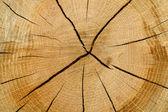 Cut log — Stock Photo