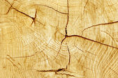 Cut log, woodgrain background texture — Stock Photo