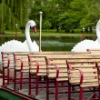 Boston Swan Boats — Stock Photo