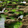 Stock Photo: Stones covered with moss on beach
