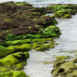 Stones covered with moss on the beach — ストック写真