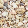 Seashells on the shore of the Mediterranean Sea. — Stock Photo