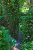Tranquil waterfall in a rainforest — Stock Photo