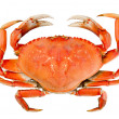 Isolated Whole Dungeness Crab — Stock Photo