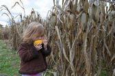 Curious Kid Trying to Eat Dry Corn Ear — Stock Photo