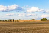 Monoculture Corn Fields of Indiana — Stock Photo