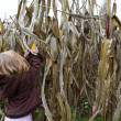 Curious Kid Trying to Pick Dry Corn Ear — Stock Photo #35011683