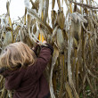 Curious Kid Trying to Pick Dry Corn Ear — Stock Photo #35024337