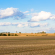 Stock Photo: Monoculture Corn Fields of Indiana
