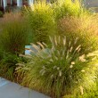 Hiding Underground Power Line Boxes with Giant Ornamental Grasses — Stock Photo