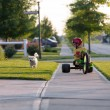 Walking the Dog with Tricycle in the Neighborhood — Stock Photo