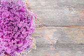 Curly-leaf purple kale on a rustic wooden board — Stock Photo