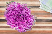 Ornamental curly-leaf purple kale — Stock Photo