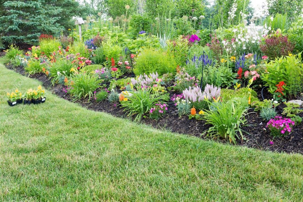parterre de fleurs luxuriante avec fleurs color es c losie. Black Bedroom Furniture Sets. Home Design Ideas