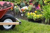 Wheelbarrow alongside a newly planted flowerbed — Stock Photo
