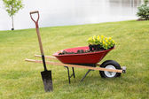 Wheelbarrow with seedlings and a spade — Stock Photo