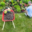 Gardener landscaping a garden — Stock Photo #48057671