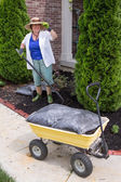 Senior woman working in the garden mulching — Stock Photo