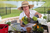 Senior lady removing a rootbound pot from a pot — Stock Photo