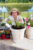 Senior lady potting up houseplants — Stock Photo