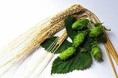 Hops and Barley — Stock Photo