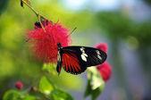 Bella farfalla — Foto Stock