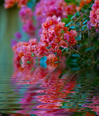 Flower Reflection — Stockfoto