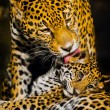 Jaguar Cubs - Photo