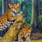 Jaguar Cubs — Stock Photo #20613977