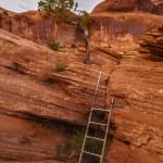 Постер, плакат: Ladder on the Trail
