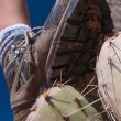 Hiking Boot over Cactus — Stock Photo