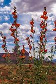 Wild Flowers in Needles — Stock Photo