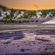 Bear in Norris Geyser Basin at Sunset — Stock Photo