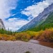 Beautiful Autumn near Cascade Creek - Grand Teton National Park — Stock Photo #33541041